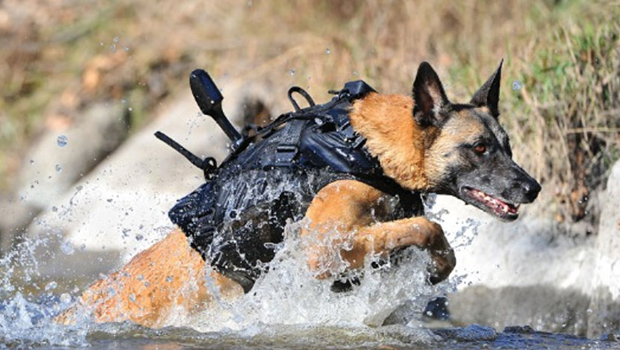 navy seals, navy seal dogs, military dogs